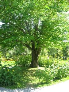 TREE!