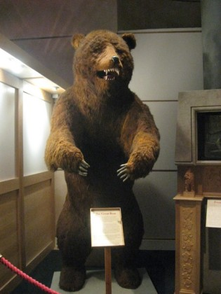 [Exit, pursued by a bear]