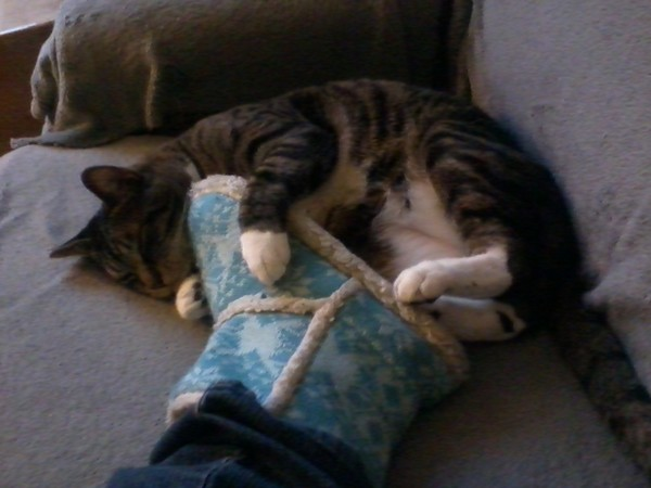 Spike (the cat) and my foot (in a slipper).